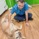 Photo of a dog on his back with a veterinarian giving him belly rubs at a clinic