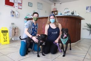NOMV Program Manager Bri & her dog Pumba at a veterinary clinic with vet tech Zoe and her dog Zucchini